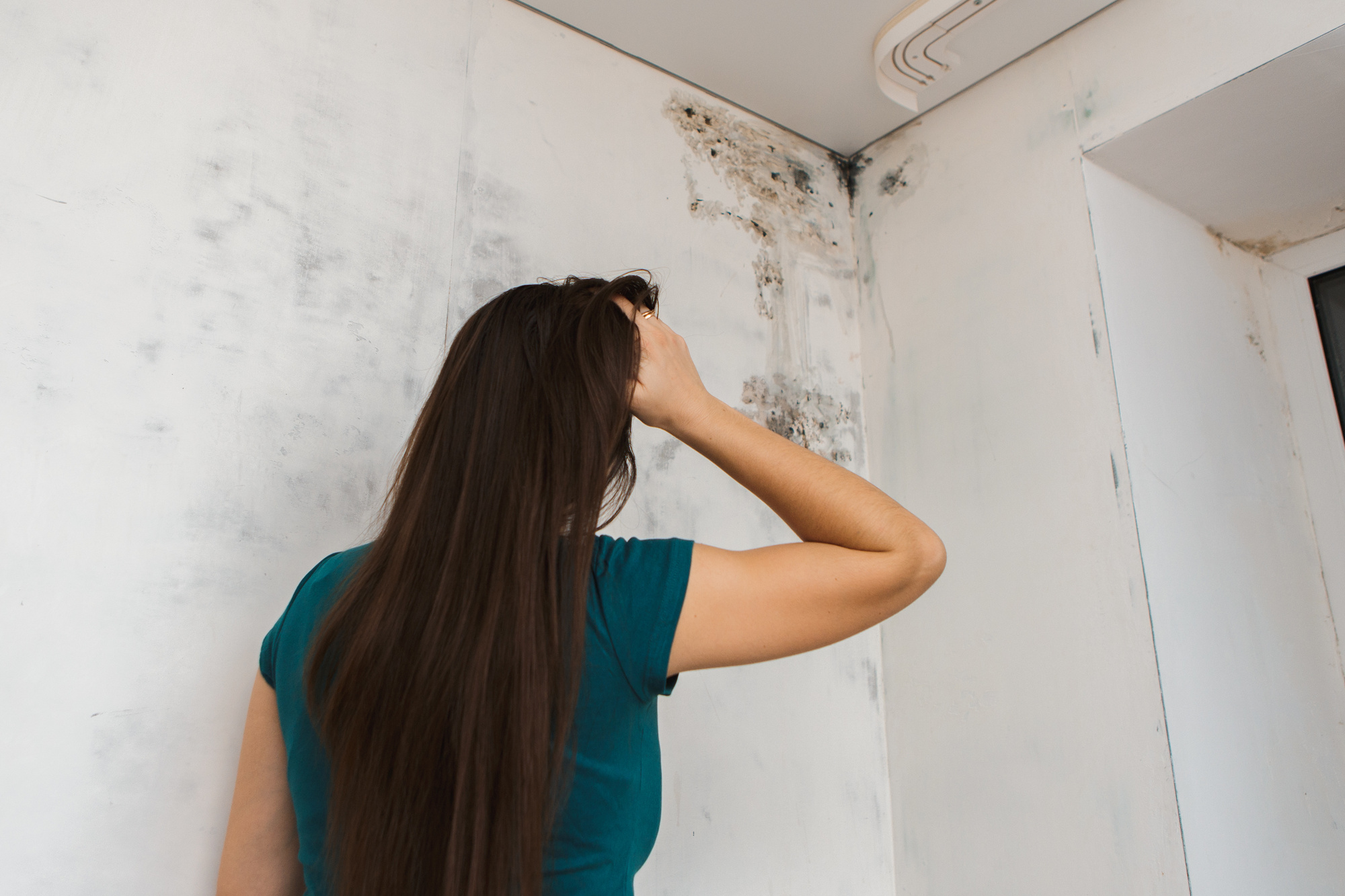 mold solutions